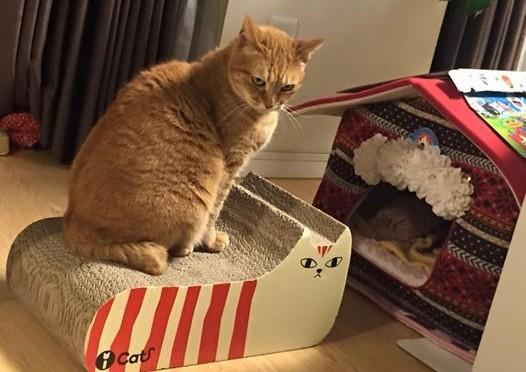 爪とぎは私のもの! ~ This Scratcher is Mine !