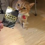 ねむりんさんまたたびダンスナイト☆ ~ Do a pole dance with Cat Powder