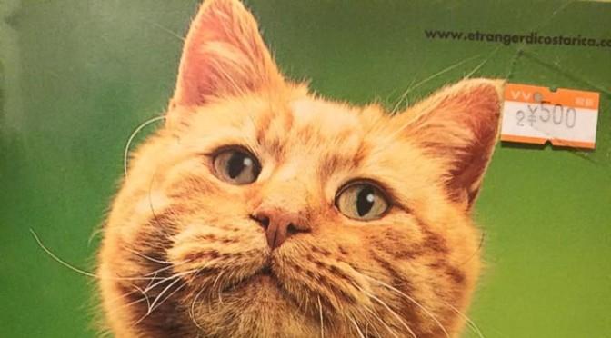 ねむりんさん似のアルバム ~ Cat like Nemu-lin