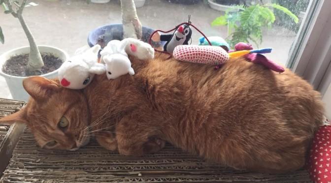 """ねこジェンガで遊ぼう ~ Play the """"Cat Jenga"""""""