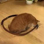 ねこねこほいほい ~ Magical Circle for Cats