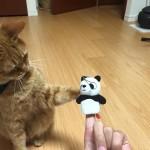パンダさんと遊ぼう ~ Play with Panda
