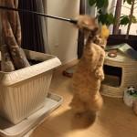 ねむりんさんが立った!! ~ Cat Stands