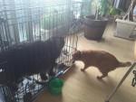 盗人ねむりん ~ Thief Cat