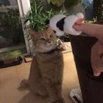 パンダさんと遊ぼう2 ~ Play with Panda 2