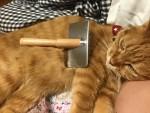 ブラッシングで子猫を作ろう ~ Making a Kitty with Brushing