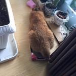 もこもこおしり ~ Fluffy Tail