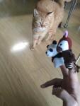 オカピさんと遊ぼう ~ Play with Okapi