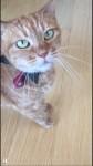 驚愕!ショッカーねこ現る! ~ So Strange Voice Cat