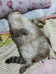 だらけリオン ~ Lazy Victolion