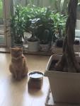 番犬ねむりん ~ Watch Cat