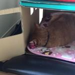 ねこオンねこ ~ Cat on Mini Cat