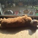 日向ぼっこ ~ Bask in the Sun