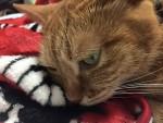 リアルねこふんじゃった動画 ~ Movie of Piano Cat
