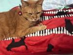 リアルねこふんじゃった ~ Piano Cat