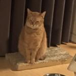 大仏ねむりん ~ Buddha Cat