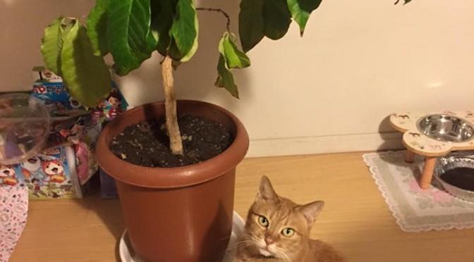 木登れず ~ Can't Climb a Tree