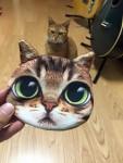秋葉原にゃんこ ~ Akihabara Cat