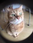 魚眼でねむりん ~ Fisheye Camera