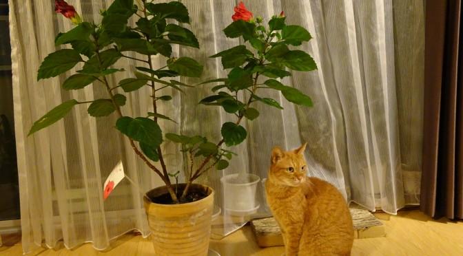 お花とねむりん ~ Flower and Cat