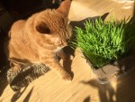 爪とぎとねこくさの間 ~ Between Scratcher and Cat Grass