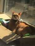 箱ぼっこ ~ Basking in a Box