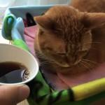 部屋とコーヒーと私 ~ Coffee and Me