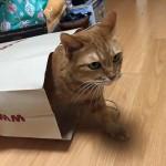 無印ねむりん ~ Bag Cat
