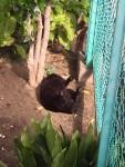 くろねこひなたぼっこ ~ Stray Black Cat
