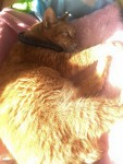 デニムねむりん2 ~ Denim Cat 2