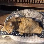 柳川にゃんこコレクション ~ Cats at Yanagawa