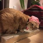 ねこ泥棒が動き出す!? ~ Thief Cat 2