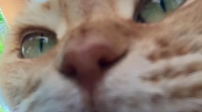 自撮りねむりん ~ First Selfie