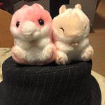 新入りころはむコロン ~ New Hamsters