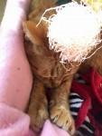 パーティーピーポー ~ Party Cat