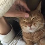 看病にゃんこ ~ Nurse Cat