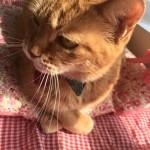 熊本のねこたちへ ~ For Kumamoto Cats