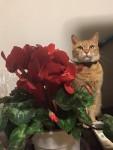お花とねむりんさん ~ Flower and Cat