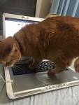 ねこの手、貸します ~ Cat-Help