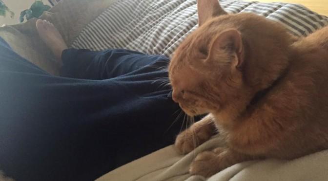 にゃっさーじ師ねむりんさん ~ Cat Massager