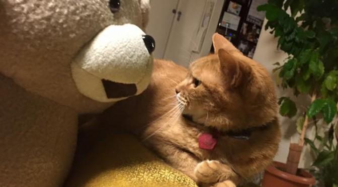 テッドとねむりんさん ~ Ted Comes