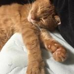 会いにいけるにゃいどるの握手会 ~ Shake-hands with Cat Idol