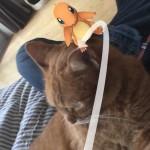 ぽけにゃん発見 ~ Pokemon Go Cat