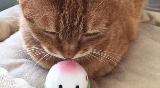 ヤーマンのメンズレイボーテで新感覚おひげケア!? ~ Caring for whiskers by Men's Rei Beaute !?